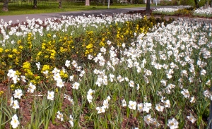 Achtung - Überfall Der Frühling ist nämlich angekommen. Das ist nur ein Beet. Es gibt noch ein zweites in der  selben Größe.  (Damit man Bescheid  weiß daß Frühling is!